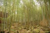 鹿谷-溪頭森林遊樂區:鹿谷-溪頭森林遊樂區 (20081206a) 31