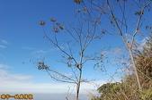 台中-大坑第四登山步道-頭嵙山(2011.01):大坑第四登山步道-頭嵙山 (2011.01) 18