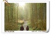 鹿谷-溪頭森林遊樂區:鹿谷-溪頭森林遊樂區(20081206a) 28
