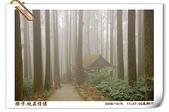 鹿谷-溪頭森林遊樂區:鹿谷-溪頭森林遊樂區(20081206a) 22