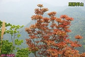 大湖-馬那邦山(2011.04):馬那邦山(201104) 34