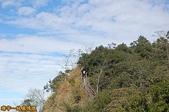 台中-大坑第四登山步道-頭嵙山(2011.01):大坑第四登山步道-頭嵙山 (2011.01) 15