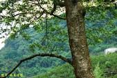 和平-達觀-摩天嶺(2012.06):和平-達觀-摩天嶺(201206) 16