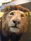 英國遊記本:lion