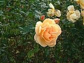 英國遊記本:rose