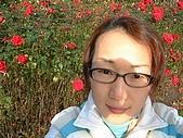 英國遊記本:rose2