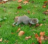 英國遊記本:松鼠