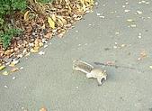 英國遊記本:松鼠2