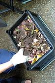 廚餘製作過程:灑上大自然基肥(生物性堆肥菌種)