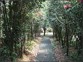 新北市.瑞芳區.長壽嶺登山步道:[fuli19610302] 長壽嶺 (3).jpg