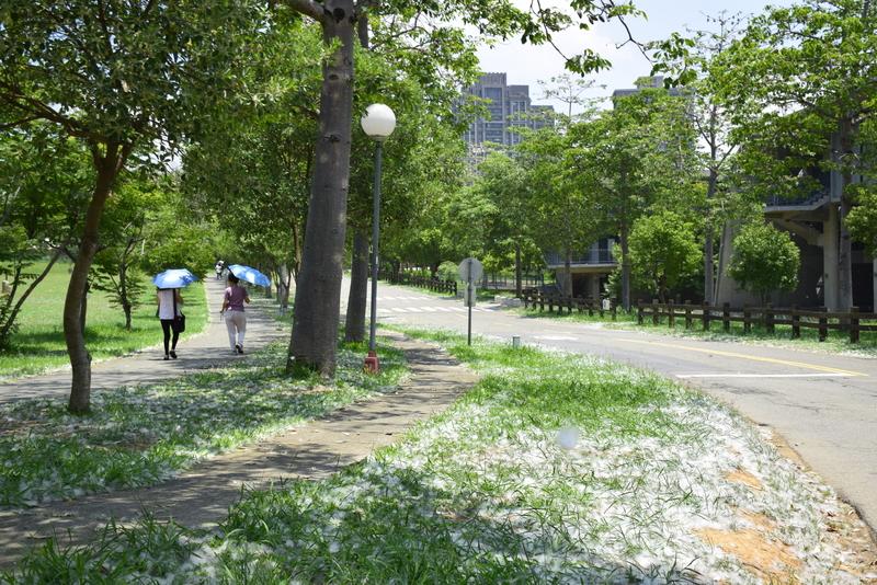 台中市.西屯區.東海大學:[lsg2006] 東海大學