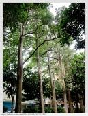 桃園市.桃園區.朝陽森林公園:[k5637849] 朝陽森林公園