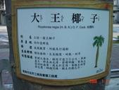 高雄市.左營區.高雄左營三角公園:[liupangyen] 097年01月21日南左營三角公園_34.JPG