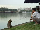 台北市.內湖區.碧湖公園:[liwen2010] DSC05469.JPG