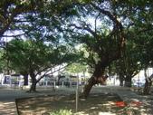 高雄市.左營區.高雄左營三角公園:[liupangyen] 097年01月21日南左營三角公園_46.JPG