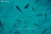 沖繩縣.Busena海中公園 ブセナ海中公園:[rainsakura] Busena海中公園 ブセナ海中公園