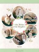 台中市.東區.魔法兔兔 MF22 - 寵物兔友善餐廳:[blue_sky23] 魔法兔兔 MF22 寵物兔友善餐廳