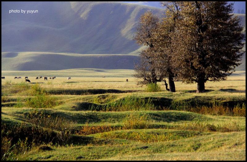 新疆維吾爾自治區.那拉提草原:[elai] DPP_0006.JPG