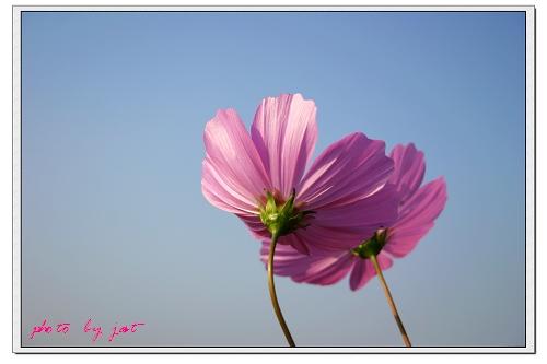 台中縣.后里鄉.花田拼布公園:[jast_lien]3.jpg