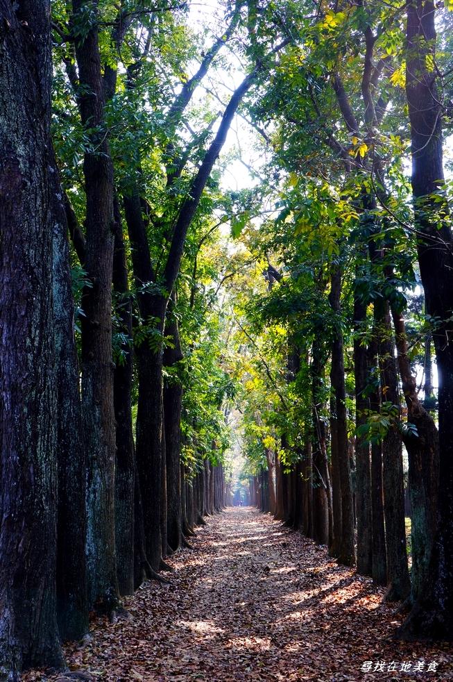 高雄市.六龜區.新威森林公園:[ca062] DSC03884.jpg