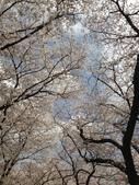 京都府.淀川河川公園背割堤地区:[lovechacha.net] 淀川河川公園背割堤地区