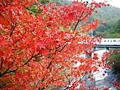 台中市.和平區.武陵農場:[carolchia] P1010839.JPG