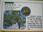 高雄市.楠梓區.高雄都會公園:[liupangyen] IMG_3965黃金風鈴木.jpg