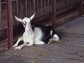 宜蘭縣.冬山鄉.宜農牧羊場:[kw11165848] 010.jpg