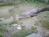 台中縣.太平市.非洲觀光鱷魚繁殖場:[ftvtv] DSCN3781.JPG
