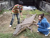 台中縣.太平市.非洲觀光鱷魚繁殖場:[ftvtv] IMG_5327.JPG