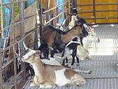 宜蘭縣.冬山鄉.宜農牧羊場:[maruko010180] P1080849.JPG