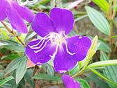 苗栗縣.大湖鄉.草莓文化館 (大湖酒莊):[shellon] 紫的發暈