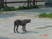 高雄市.楠梓區.高雄都會公園:[liupangyen] 高雄沼氣發電廠_18.JPG