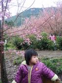 台中縣.和平鄉.武陵森林遊樂區:[jazzyang] DSCF3892.JPG