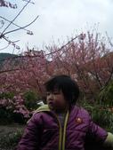 台中縣.和平鄉.武陵森林遊樂區:[jazzyang] DSCF3894.JPG