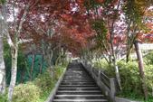 宜蘭縣.大同鄉.太平山森林遊樂區:[jnchi2001] P1020135.jpg