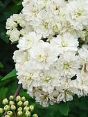苗栗縣.大湖鄉.草莓文化館 (大湖酒莊):[shellon] 錦簇的春天