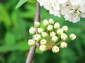 苗栗縣.大湖鄉.草莓文化館 (大湖酒莊):[shellon] 含苞待放的希望