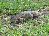 曼谷.倫披尼公園Lumphini Park:[mok25007008] xtba004290_蒙金蘭攝.jpg
