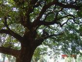高雄市.左營區.高雄左營三角公園:[liupangyen] 097年01月21日南左營三角公園_25.JPG
