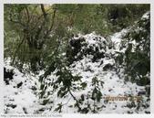 台北市.士林區.陽明山國家公園雪景之美:[k5637849] 陽明山國家公園雪景之美