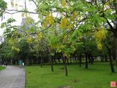 台北市.大安區.大安森林公園:[yuhyng] 大安森林公園隨逛 (8).jpg