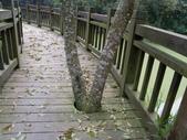 台北市.內湖區.大崙湖環湖步道:[anny1958] IMGP3197.JPG