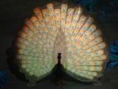 台北市.士林區.國立故宮博物院:[snoopy7219] DSC01984.JPG