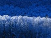 (這是一本待審核的相簿):[liangkuo] Winter.jpg