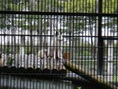 花蓮縣.鳳林鎮.新光兆豐休閒農場:[lion.love]  DSC02613.JPG