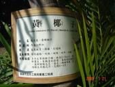 高雄市.左營區.高雄左營三角公園:[liupangyen] 097年01月21日南左營三角公園_36.JPG