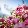 花卉試驗中心