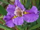 (這是一本待審核的相簿):[hsu.demi] 紫13.jpg