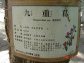 高雄市.左營區.高雄左營三角公園:[liupangyen] 097年01月21日南左營三角公園_42.JPG
